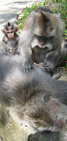 Banner home - Ubud Monkey Forest - 262 x 546 px