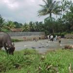 Bogor.hb.guesthouse 3