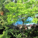 Bali.Ubud.Puri_Garden.zwembad.12
