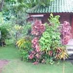 Ubud_Sania Guesthouse_1