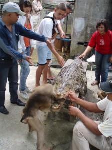 Sumatra krokodillen-farm