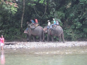 Sumatra jungle tour